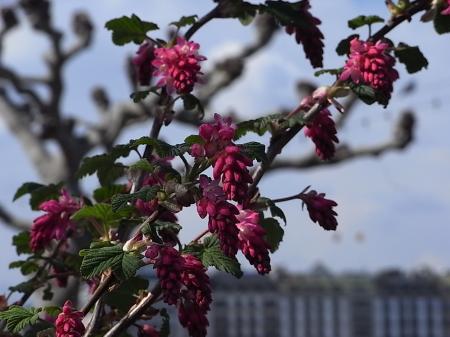 春の散歩11