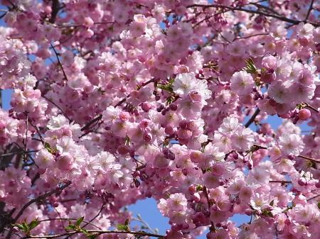 春の散歩14