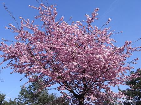 春の散歩13