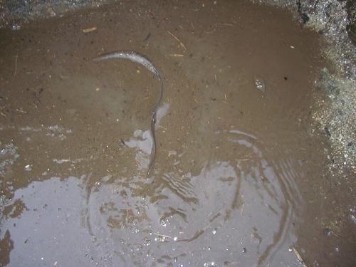 2009.秋貯水池清掃 (2)