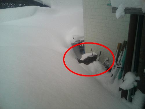 2008.雪まつりオマケ (1)