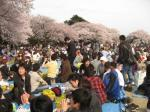 4月5日の新宿御苑1
