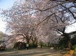 4月6日の早朝の公園