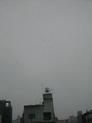 西窓の雪2