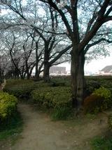 桜2011.4