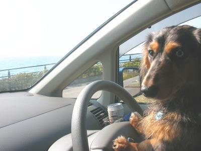 drivekirry.jpg