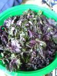 紫蘇の葉っぱ
