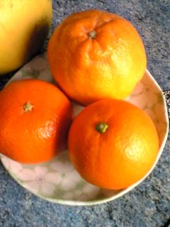 国産オレンジ・ポンカン・デコポン