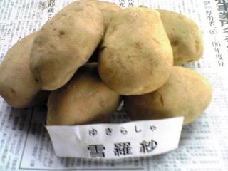 北海道産じゃがいも「ユキラシャ(雪羅紗)」