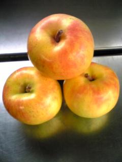 北海道余市産りんご「トキ」