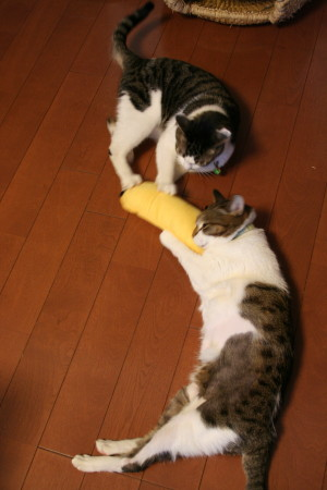 猫キック1