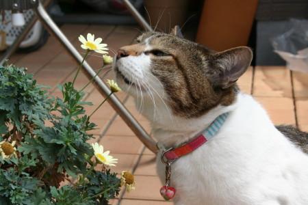 花キウイ2