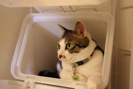 ゴミ箱ベツ1