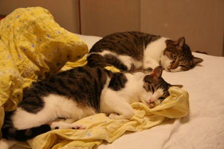 ベッド2匹1