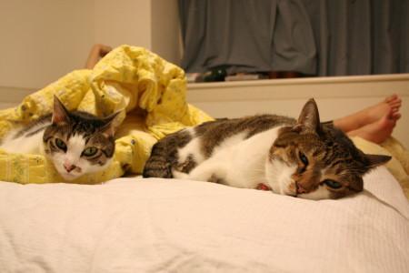ベッド2匹2