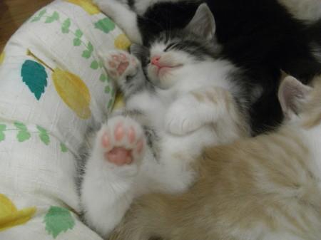 NFC子猫2