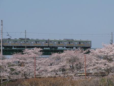 桜の上を走る八高線