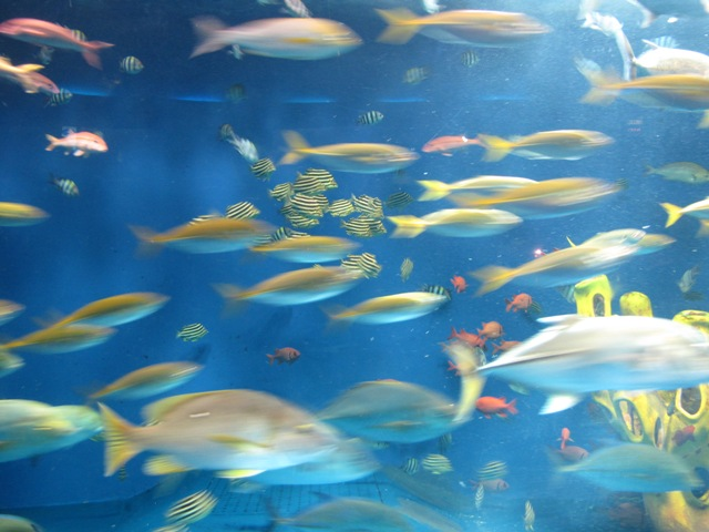 回遊水槽の魚達