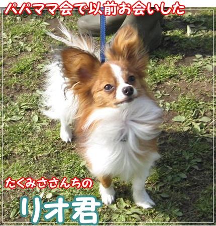 10032321.jpg