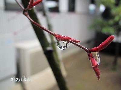 sizuku1.jpg
