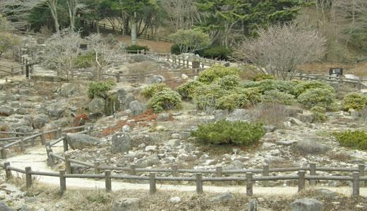 六甲高山植物園特別開園2011-1