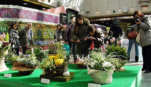 神戸花物語2011-2