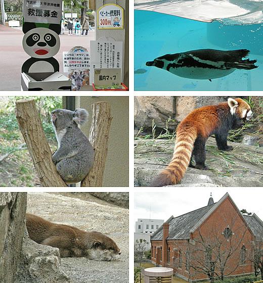 王子動物園無料開放日-2