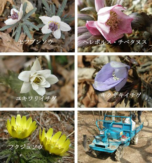六甲高山植物園2011オープニング(2)