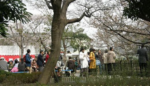 岡本南公園観桜会2011