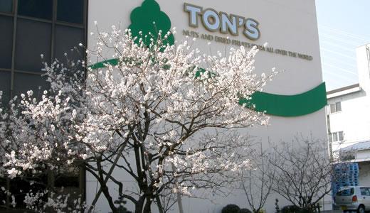 アーモンドの花がが咲いた@東洋ナッツ-1