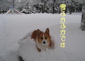 雪ふかふか