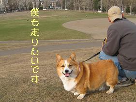 かもちゃんの公園