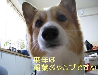 いなばじゃんぷ