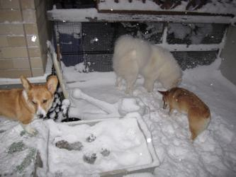 20085 11 20 3dogs3