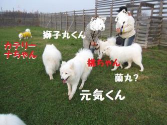 2008 11 15 dogstook1