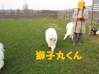2008 11 15 dogstook2