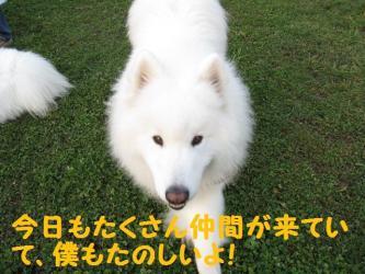 2008 11 15 dogstook3