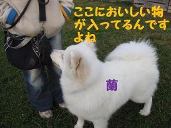 2008 11 15 dogstook4