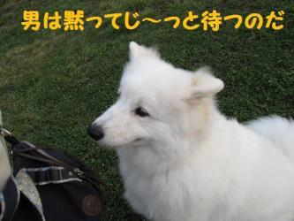 2008 11 15 dogstook5