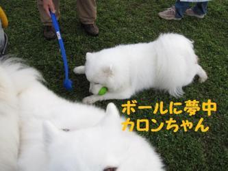2008 11 15 dogstook6