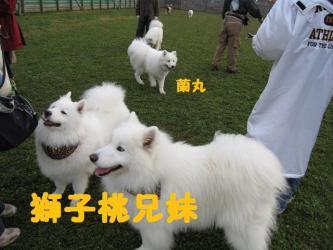 2008 11 15 dogstook7