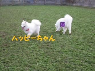 2008 11 15 dogstook8