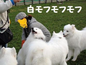 2008 11 15 dogstook9