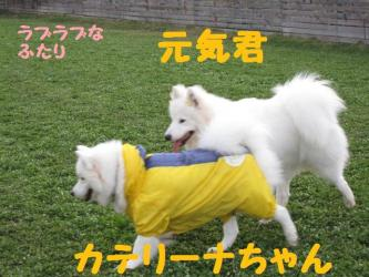 2008 11 15 dogstook10