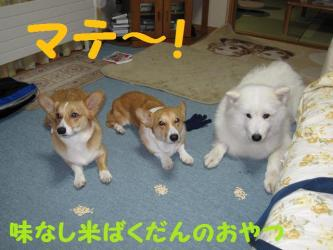 2008 11 23 3dogs