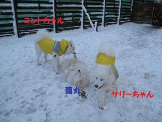 2008 11 24 dogstook1