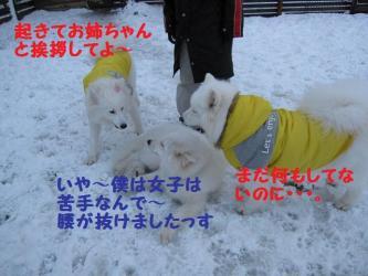 2008 11 24 dogstook2