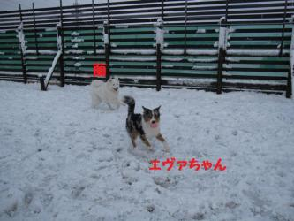 2008 11 24 dogstook3