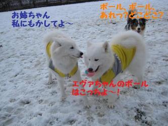 2008 11 24 dogstook4