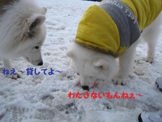 2008 11 24 dogstook5